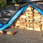 Wood stack so far this summer around 8-10 cords so far