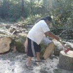 Tree cut into rounds for splitting