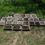 OVER 400 STARTER PLANTS