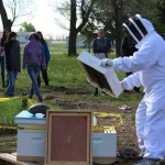 BEES HAVE ARRIVED